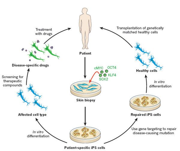 applications of stem cell research